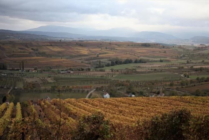 Vue en direction du Mt Ste Odile et du Heidenkopf - Copie