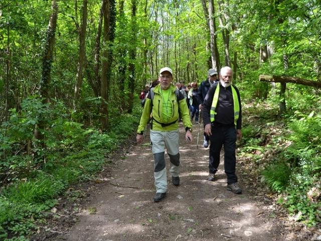 Forêt du Wangenberg
