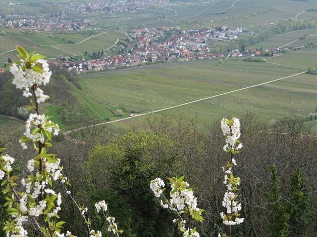 Vue depuis le château Neukastel