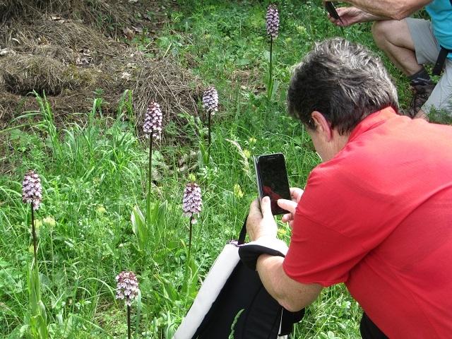 L'orchidée pourpre
