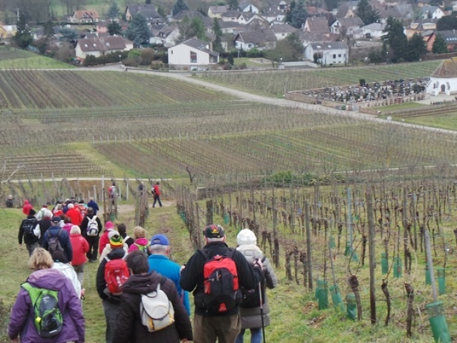 L'Altenberg à Wolxheim