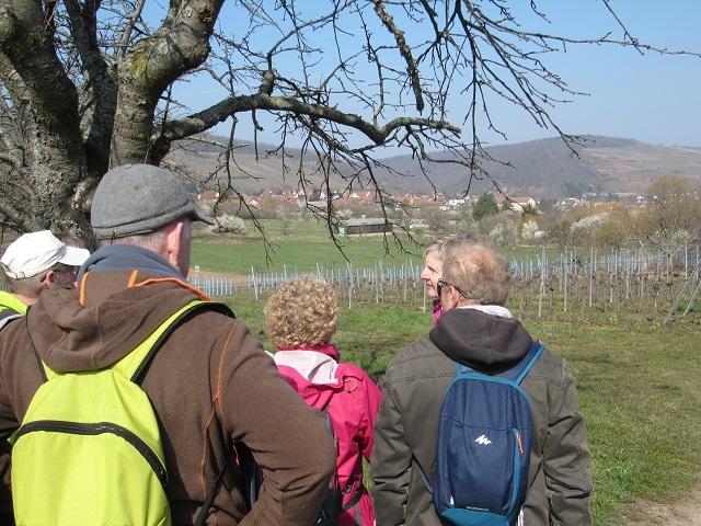Entre Traenheim et Wangen