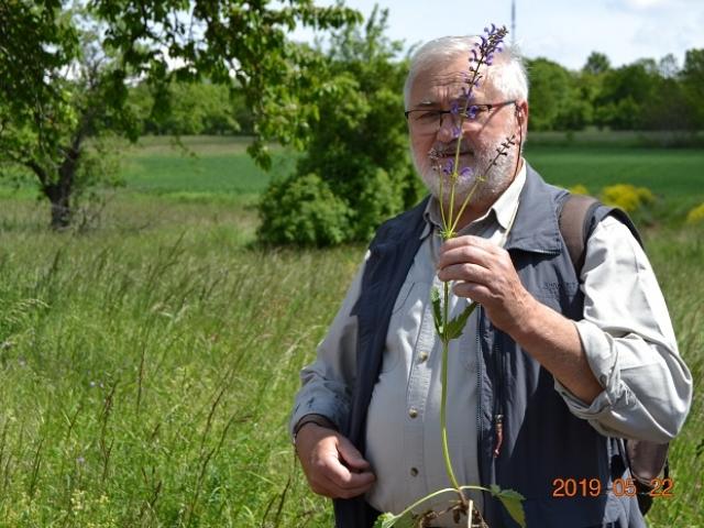 Edmond présente la sauge des prés - Salvia pratensis
